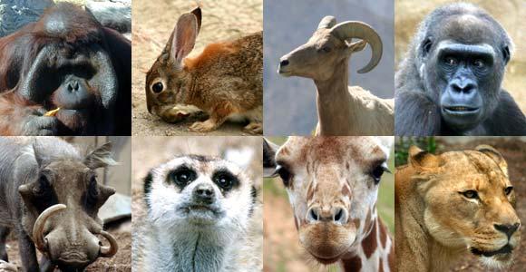 حیواناتی که ابزار دیپلماسی شدند+ تصاویر