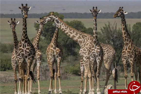 حیواناتی که ابزار دیپلماسی شدند!