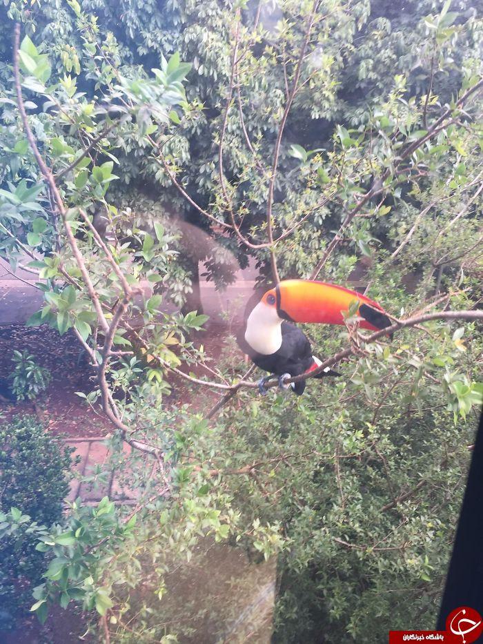 تصاویری جالب از حضور پرندگان و حیوانات در نزدیکی محل سکونت انسان ها