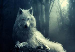 نقش گرگ در محیط زیست + فیلم