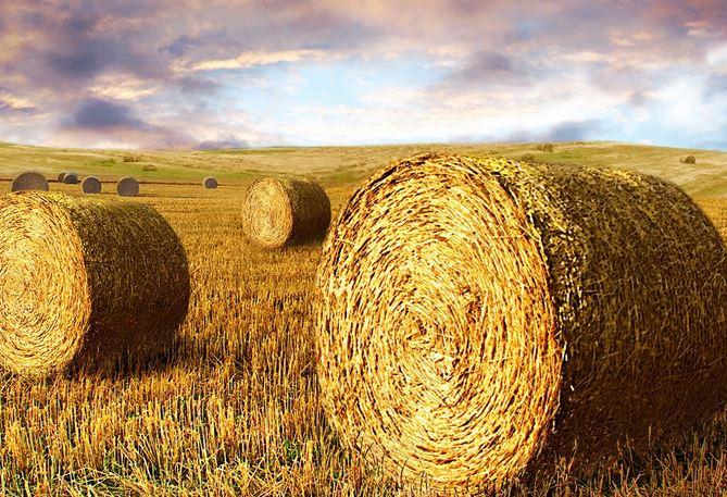 لیست قیمت انواع نهاده های دامی و کشاورزی در بازار