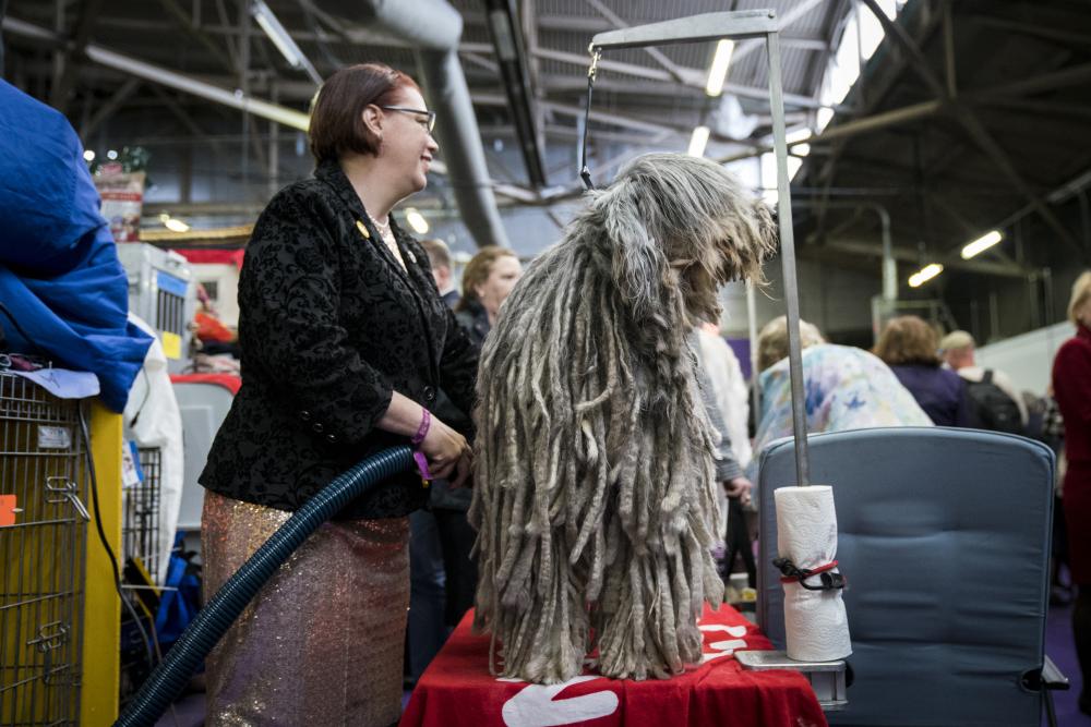 نمایشگاه سگ های زینتی در نیویورک+ تصاویر
