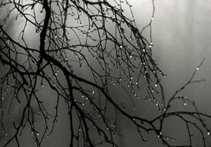 باران به دروازه فارس رسید + فیلم