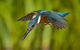 باشگاه خبرنگاران -ویدئویی جالب از تمرین تمرکز در پرندگان