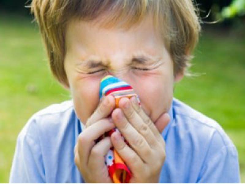 باشگاه خبرنگاران -هشدار، این حشرات در خانه شما جا خوش کرده اند/ آلرژی در کمین کودکان است