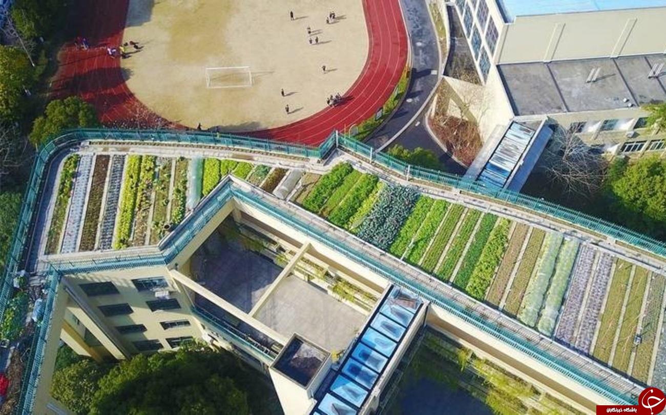 تصاویری از پشت بام رویایی یک مدرسه