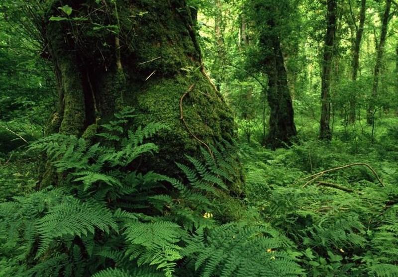 جنگلهای هیرکانی؛ موزه طبیعی ۴۰ میلیون ساله+ تصاویر