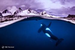 عکسهای برگزیده مسابقه عکاسی زیر آب سال 2018