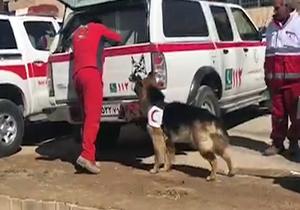استفاده از سگهای زندهیاب در محل سقوط هواپیمای تهران – یاسوج + فیلم
