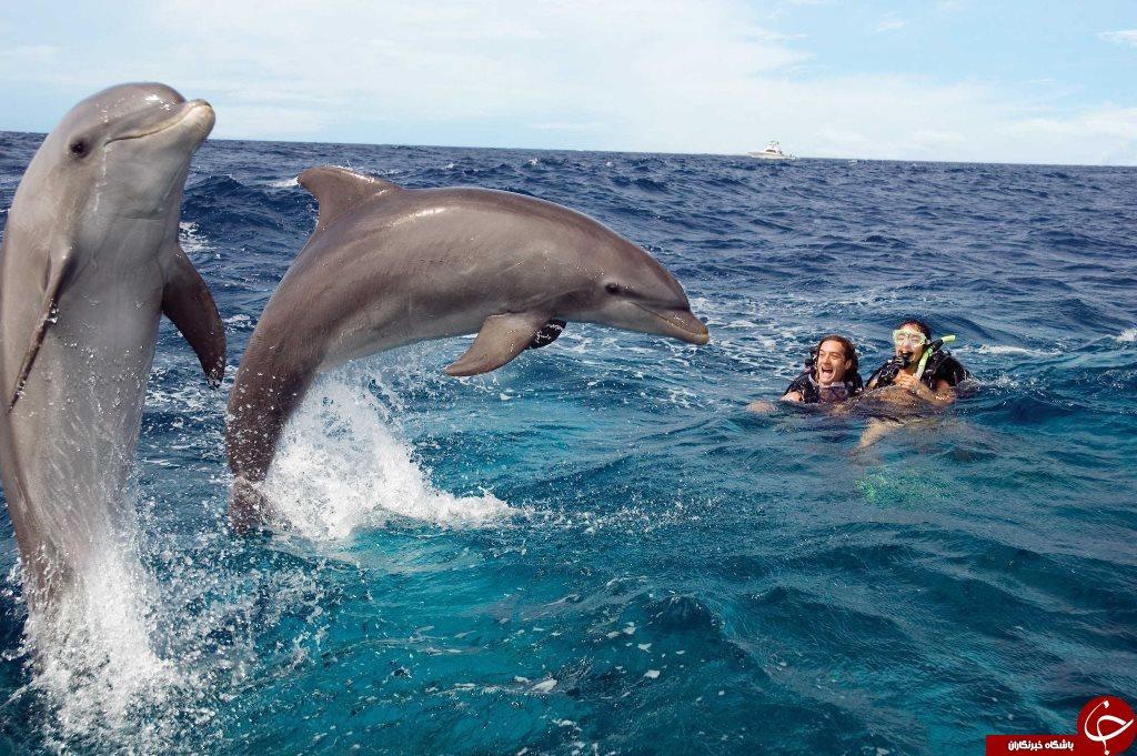 دانستنیهایی جالب درباره دلفینها+تصاویر