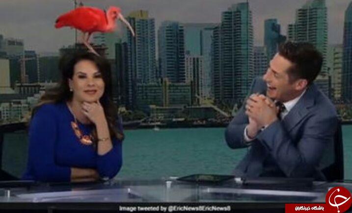 اتفاق جالب برای گوینده خبر هنگام پخش زنده + فیلم
