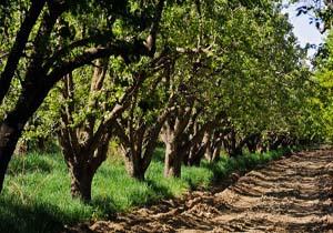 باشگاه خبرنگاران -نگرانی درباره باغ سیب مهرشهر وجود ندارد