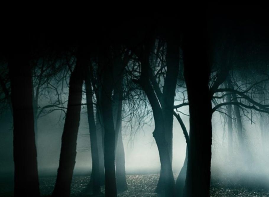 پدیده ای مرموز در یک جنگل که به معمایی لاینحل تبدیل شده است+تصاویر