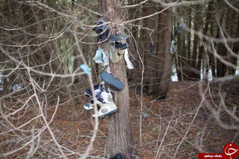 پدیدهای مرموز در جنگلی دورافتاده که به معمایی لاینحل تبدیل شده است+تصاویر