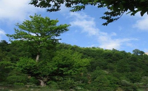 جنگل اولنگ را بهتر بشناسیم + تصاویر