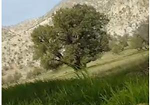 چشم اندازی از طبیعت بهاری در ایلام + فیلم