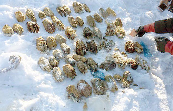 کشف 54 دست بریده در یک کیسه توسط ماهیگیران + ع