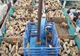 افزایش قیمت گوشت ارتباطی به قاچاق دام زنده ندارد