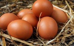 پسری که تخم مرغ میگذارد!+ عکس