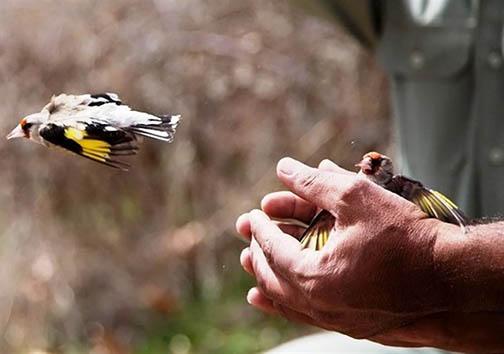 رهاسازی ۱۰۰ قطعه پرنده در طبیعت بروجرد