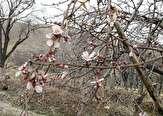 باشگاه خبرنگاران -بهار در زمستان استان مرکزی + تصاویر