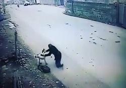 لحظه حمله سگ وحشی به دختر جوان + فیلم
