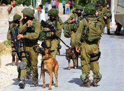 حمله نظامیان صهيونيست به یک کودک فلسطینی با سگ + فیلم