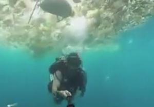 ویدئو سلفی جالب یک غواص از زباله های دریایی