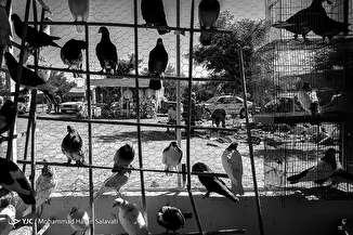جمعه بازار پرنده فروشان مشهد