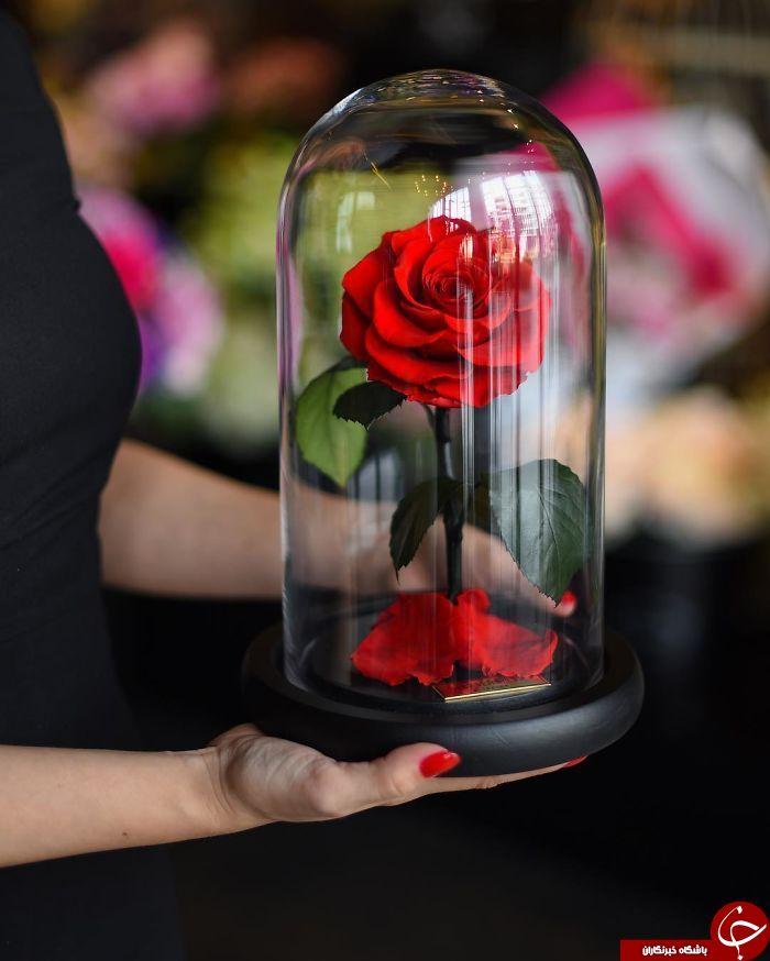 عمر طولانی گل های رز با فناوری جدید