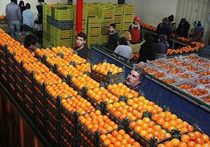 توزیع میوه شب عید در بوکان