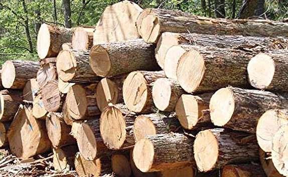باشگاه خبرنگاران -كشف 4 تن چوب قاچاق در لنگرود