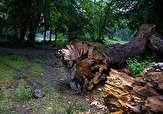 باشگاه خبرنگاران -نابودی منابع طبیعی در فریدونشهر + فیلم