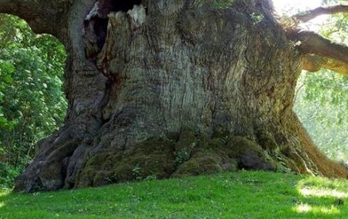 گردشگری طبیعی و تاریخی با سرو هزارساله هرزویل