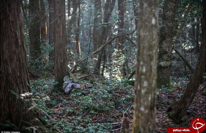 تصاویر جدید شکار شده از جنگل خودکشی در ژاپن