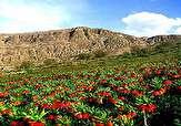 باشگاه خبرنگاران -سفر رئیس سازمان میراث فرهنگی در ایام نوروز به لرستان