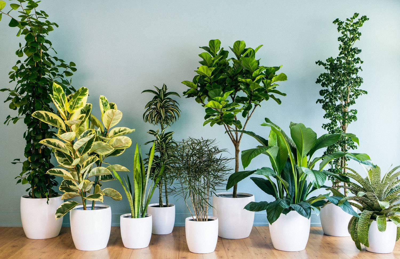 راهنمای خرید گل و گیاههای آپارتمانی