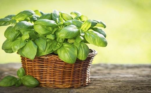 خلاصی از خستگی با نسخههای طبیعی/ معجزه خوراکیها در ایجاد آرامش و نشاط