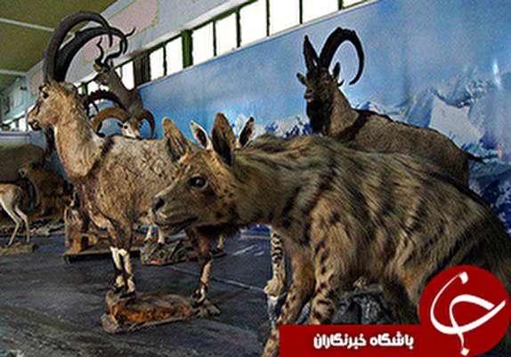 باشگاه خبرنگاران - موزه حیات وحش آموزش و پرورش لرستان در ایام نوروز پذیرای علاقمندان