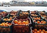 باشگاه خبرنگاران -در بازار اصفهان کمبود میوه نداریم