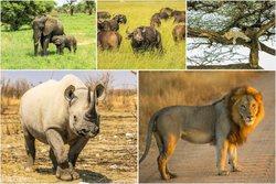 پیرترین حیواناتی که هنوز زنده هستند+تصاویر