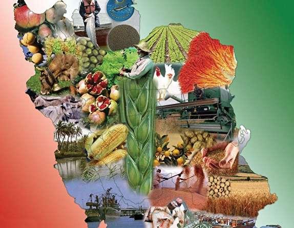 خودکفایی در محصولات کشاورزی تا چه میزان محقق شد؟/گزارش های عجیب از واردات محصولات زراعی و باغی!