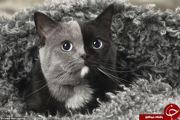 گربهای که با دو چهره معروف شد + فیلم