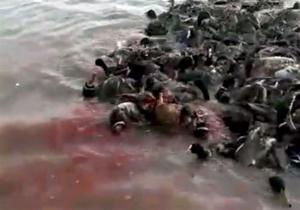 واکنش مدیر ملی طرح حفاظت از تالابهای ایران به انتشار فیلم پرندگان سر بریده در دشت آزادگان