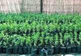 2 میلیون اصله نهال در استان سمنان تولید میشود