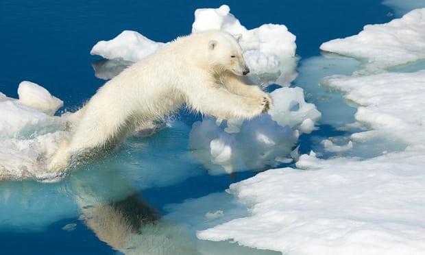 باشگاه خبرنگاران -گرمای بیسابقه در قطب شمال حیات موجودات زنده را در خطر قرار داده است