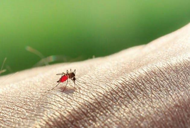 جنگ انسان با پشه زیکا/ آیا فناوری های ژنتیکی تنها راه چاره است؟