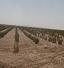 باشگاه خبرنگاران - کاشت گیاه تاغ در مناطق بیابانی ده نمک