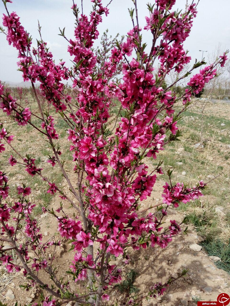 عکسهای طبیعت بهاری زیبا