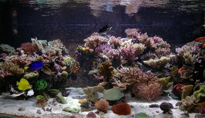 مرز نابودی 10هزار هکتار سواحل مرجانی با توسعه پارس جنوبی/ نابودی کامل مرجان های کره زمین تا 30 سال آینده